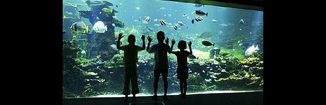 Nausicaa aquarium Boulogne sur mer