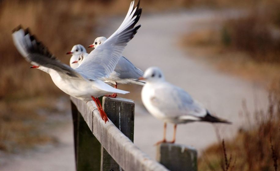 Découvrez la réserve naturelle du Marais de Condette